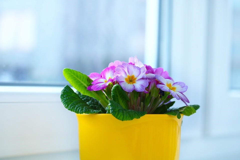 c1be835dabf 5 Ways To Bring Spring Into Your Home
