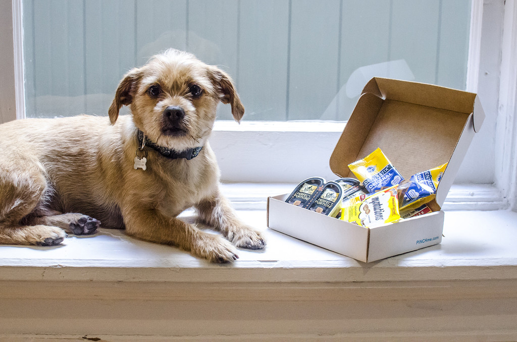 You Can Now Try Out The Latest Dog Products For Free! No, Seriously, For  Free!